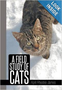The ultimate book for cat lovers